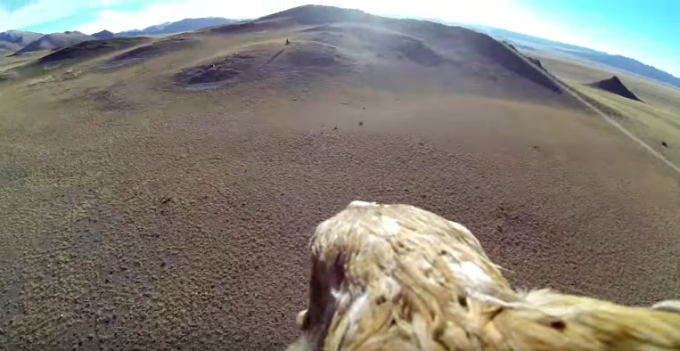 Golden Eagle point of view - Mongolia - GoPro